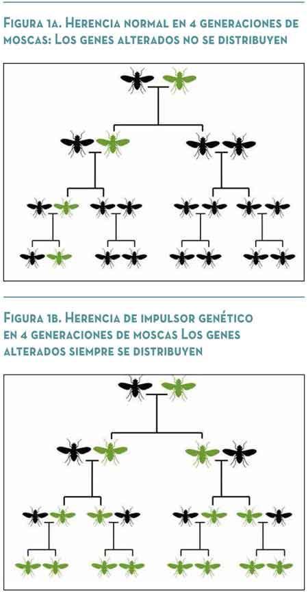 Acciones Temerarias Los Impulsores Genéticos Y El Fin De La