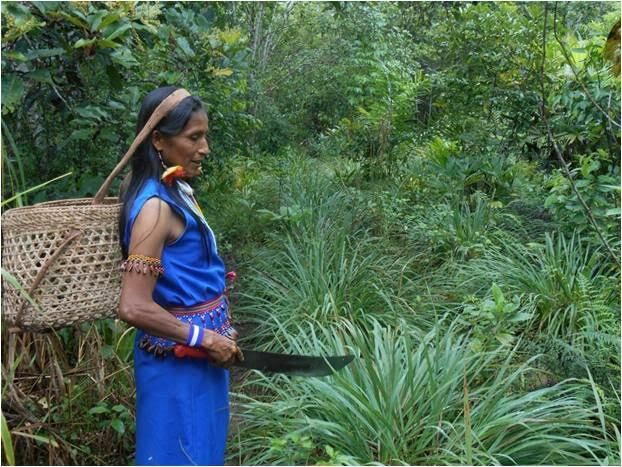 Agricultura Ancestral En El Ecuador Biodiversidad En
