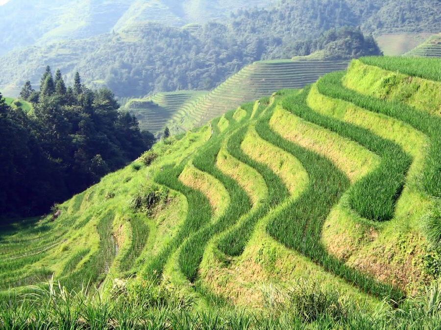 significado de terraza biodiversidad en am rica latina conocimientos