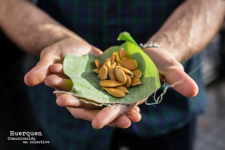 Ley de Semillas: ¿Decretazo de Macri para las corporaciones del agronegocio?